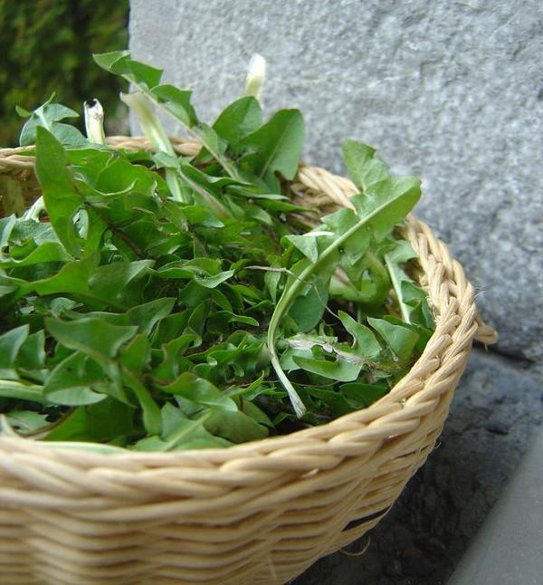 Feuilles vertes pour p ques simplement cru - Appareil pour ramasser les feuilles ...