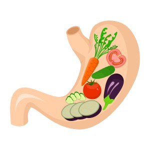 illustration dedicated to healthy eating - vegetables in the stomach.